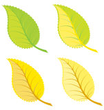 Colorful leaves illustration Royalty Free Stock Photography