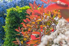 Colorful leaves at Isabella Plantation  Suitable for making background images stock photo