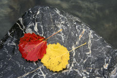 Colorful leaves isolated on stone. With water drops Royalty Free Stock Photo