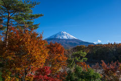 Colorful leaves with Mt.Fuji Royalty Free Stock Photo