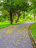 Colorful leaves in the park royalty free stock photography