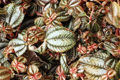 Colorful Leaves on Plants. Background image of colorful leaves on plants Stock Image