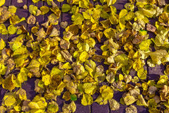 Colorful Leaves on Road from Brick Stock Photography