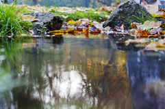 Colorful leaves and rocks in creek. Autumn background Stock Images