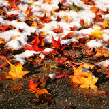 Colorful leaves in the snow Royalty Free Stock Photo