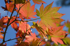 Colorful Leaves, South Korea Royalty Free Stock Images