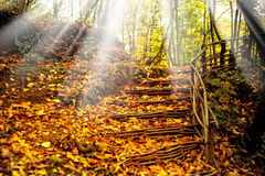Colorful leaves and staircase Stock Photos