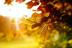 Colorful leaves with sunbeam. At morning stock photos