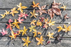 Colorful leaves Stock Photo