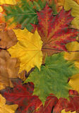 Colorful leaves. Texture. Autumn pattern, different leaves Royalty Free Stock Photo