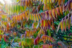 Colorful leaves in the autumn royalty free stock photography