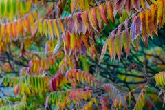 Colorful leaves in the autumn stock photo