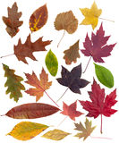 Colorful leaves Stock Image