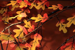 Colorful leaves on tree branch Stock Photos