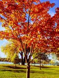 Colorful leaves on tree Stock Images