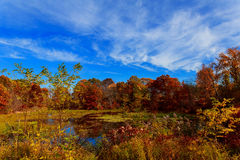 Colorful leaves on trees along lake in autumn, Stock Photo