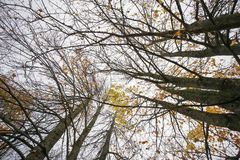Fall background with tree branches Royalty Free Stock Images