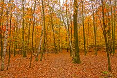 Colorful Leaves on the Trees and the Ground. In Potawatomi State Park in Wisconsin Royalty Free Stock Photo