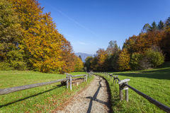 Colorful leaves on the trees in the mountains Stock Photography