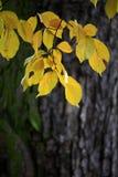 Colors of autumn season in Mazovia region in Poland. Colorful leaves and tress in autumn season in Mazovia region in Poland Royalty Free Stock Photos