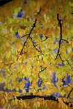 Colors of autumn season in Mazovia region in Poland. Colorful leaves and tress in autumn season in Mazovia region in Poland Royalty Free Stock Photo