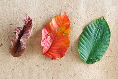 Colorful leaves tropical season, rainny, winter, and summer on wooden paper texture Royalty Free Stock Photo