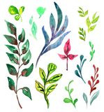 Colorful leaves variety different shapes set. Leaves colorful and shape variety collection, isolated on white hand painted watercolor illustration Stock Images