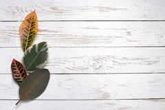Colorful leaves on white wood background stock photos