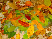 Colorful Leaves in Wisconsin Stock Image