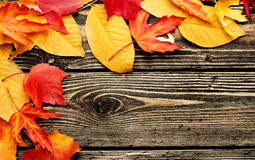 Colorful leaves on a wooden background Royalty Free Stock Photos