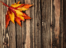 Colorful leaves on a wooden background Stock Photo
