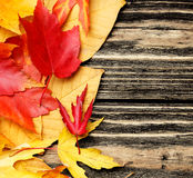 Colorful leaves on a wooden background Stock Photography