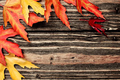 Colorful leaves on a wooden background Royalty Free Stock Photography