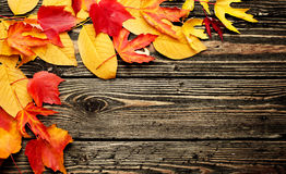 Colorful leaves on a wooden background Stock Photos