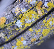 Colorful Lichen Stock Photos