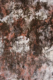 Colorful lichen background Stock Photo