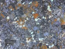 Colorful Lichen Grows on Limestone. A beautiful texture of living and dying lichen growing on a limestone rock at Dewey Nelson State Park in Wisconsin stock images