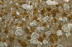 Colorful lichen Royalty Free Stock Image