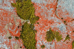 Colorful Lichens in New Zealand Stock Photos