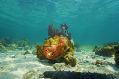 Colorful life under sea with sponges and corals Royalty Free Stock Photos