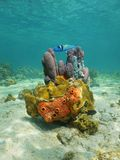 Colorful life underwater with sea sponge and coral Stock Image
