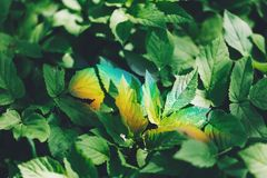 Colorful light rainbow on a green forest foliage. stock image