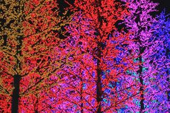 Colorful Light Tree Royalty Free Stock Image