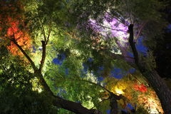 Colorful Light tree Stock Images
