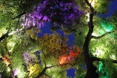 Colorful Light tree Stock Photos