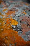 Lihens on stones. Colorful Lihens on the stone. Russian North. White Sea Royalty Free Stock Photo