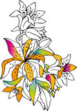 Colorful lilies Stock Images