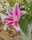 Colorful lilium flower closeup Royalty Free Stock Photos