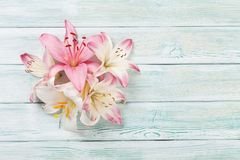 Colorful lily flowers Stock Photography