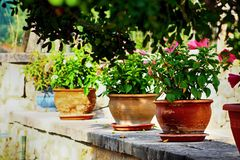 Colorful lined up flowerpots stock photo